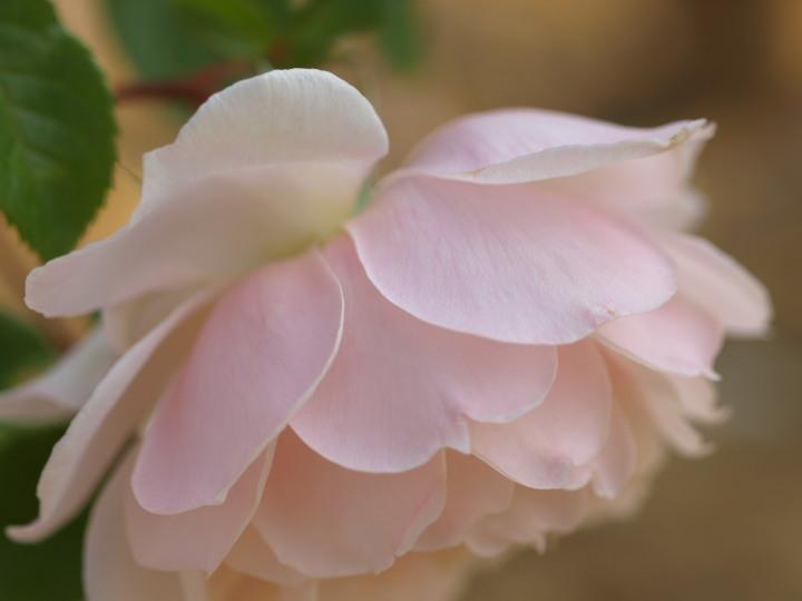 お杉ばら園2_e0169421_17321169.jpg