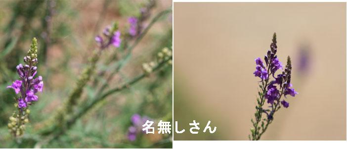 b0079523_1930887.jpg