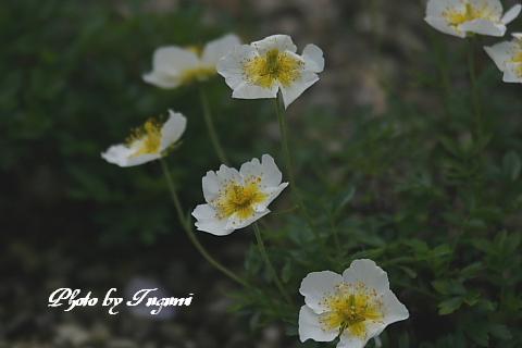剣岳登頂の記_f0037633_6452944.jpg