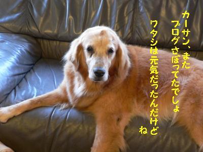 f0118135_18323492.jpg