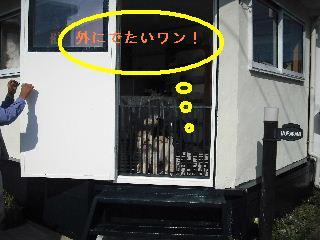 ウッドデッキ改修工事12日目 片付けとサプライズ_f0031037_2234395.jpg