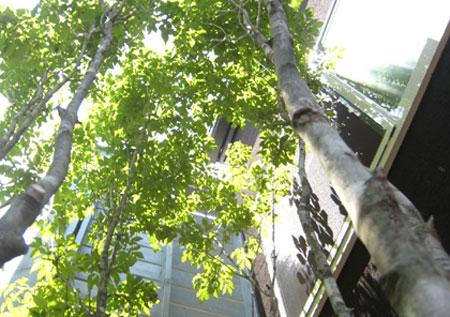 1年検査と植栽工事/西東京 南沢の基地_c0089242_12491466.jpg