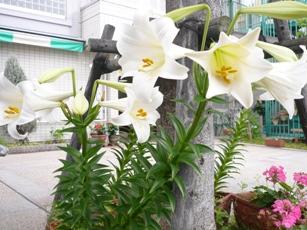 花を咲かせました!<アクティブライフ夙川>_c0107602_11562852.jpg