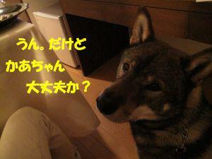 f0143123_20113937.jpg