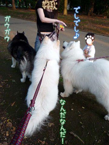 やっぱり楽しいおっきな公園_c0062832_16171242.jpg