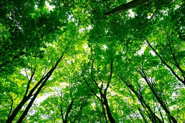鳥海山麓2 新緑と山桜_f0050534_5381985.jpg