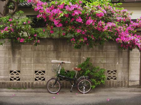花と二輪車_b0189039_23545226.jpg