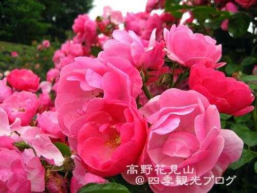 f0105342_15553613.jpg