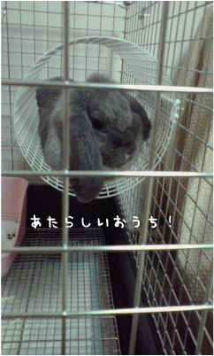 f0196660_011536.jpg