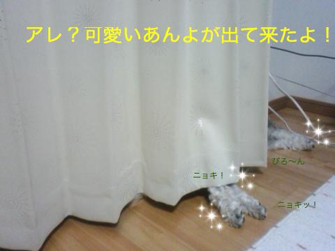 c0177261_2265991.jpg