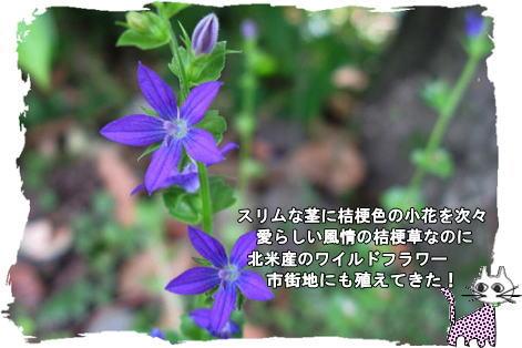 f0137096_20124256.jpg