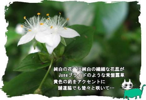 f0137096_20132739.jpg