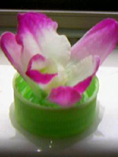 植物が主役 NO.136_c0102513_1381033.jpg