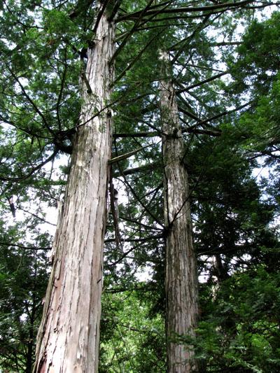 木曽路を歩く 4、赤沢自然休養林_e0048413_21553841.jpg