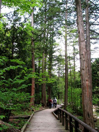 木曽路を歩く 4、赤沢自然休養林_e0048413_21555117.jpg