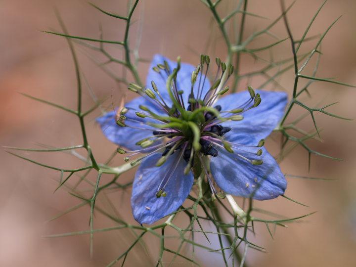 紫陽花の季節_e0169421_2255573.jpg