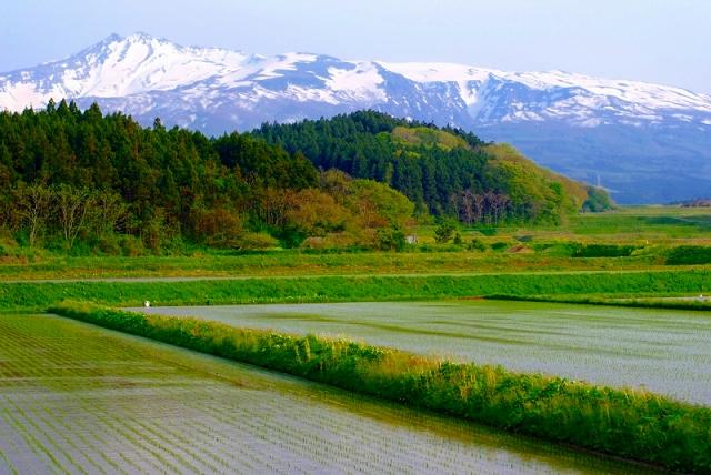 鳥海山麓3 新緑の彩り_f0050534_16531938.jpg