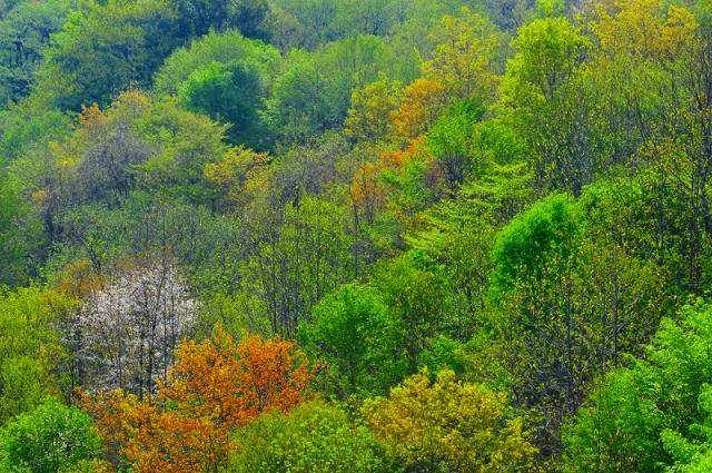鳥海山麓3 新緑の彩り_f0050534_165353.jpg
