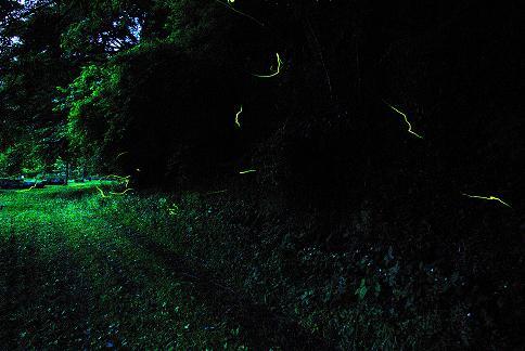 ホタルの光_a0123836_1382772.jpg