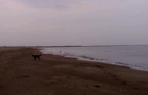 海6月10日( 水)_b0112351_531932.jpg