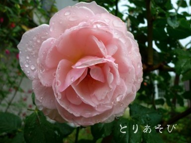 梅雨入り宣言_e0147757_1642056.jpg