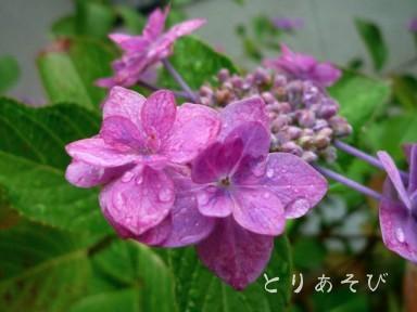 梅雨入り宣言_e0147757_164635.jpg