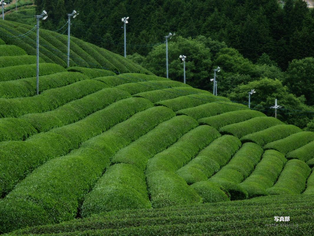 滋賀 オフ会 信楽茶畑 2_f0021869_2223265.jpg