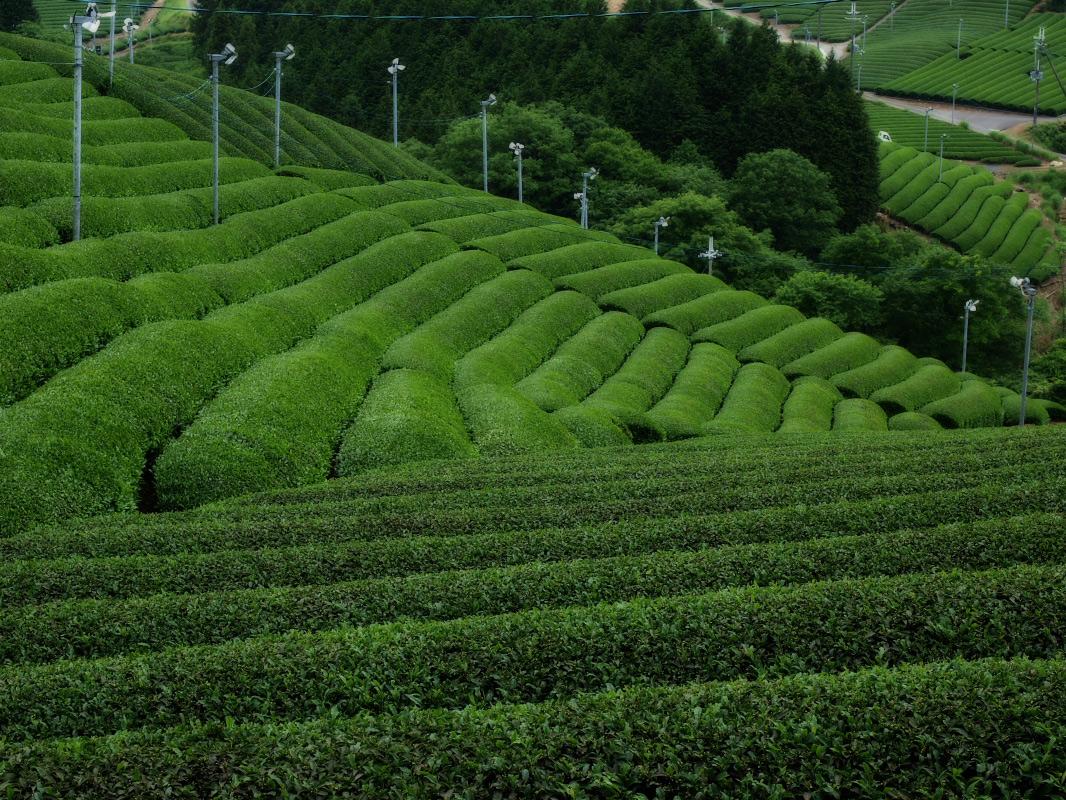 滋賀 オフ会 信楽茶畑 2_f0021869_22262020.jpg