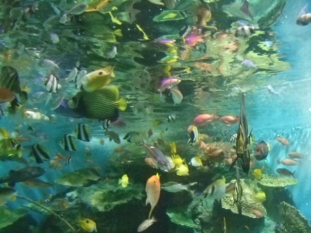 オークリーフ(水族館へ)_f0049672_18455491.jpg