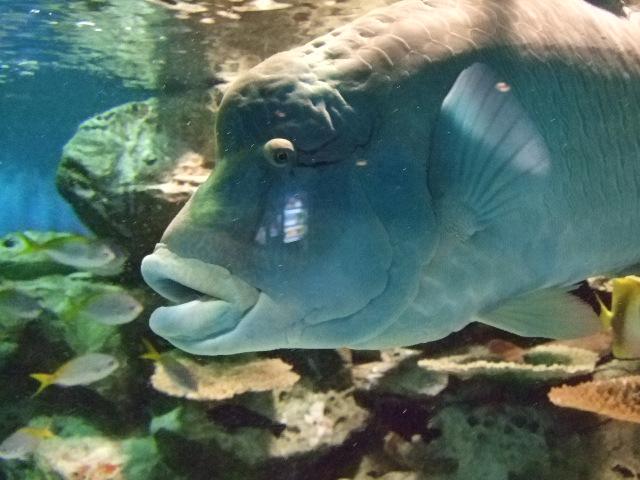 オークリーフ(水族館へ)_f0049672_18541552.jpg