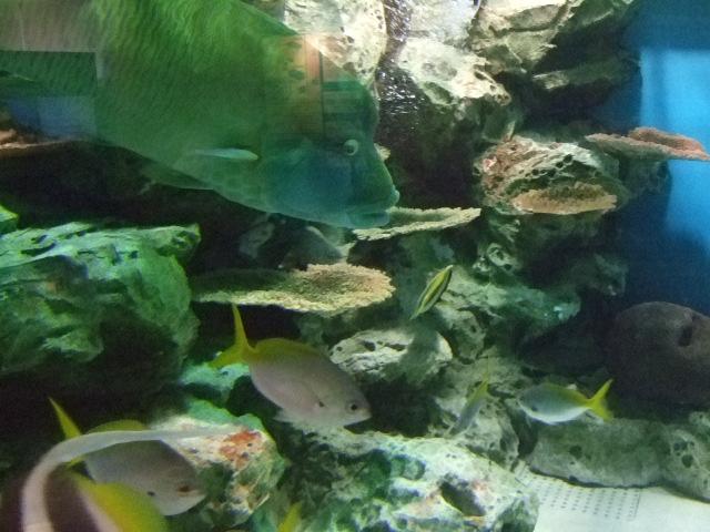 オークリーフ(水族館へ)_f0049672_1854495.jpg