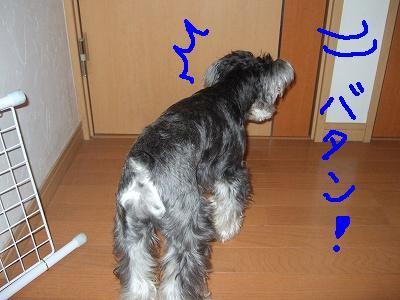 b0143879_1449122.jpg