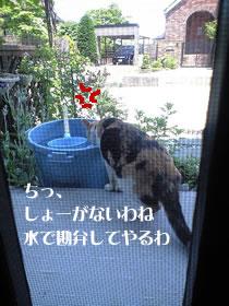 c0035001_1326308.jpg