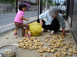 マコちゃん、じゃがいもを収穫!? 明日はお野菜販売の日!_e0166301_0012.jpg