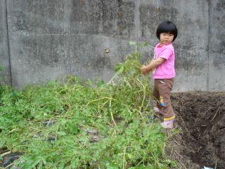 マコちゃん、じゃがいもを収穫!? 明日はお野菜販売の日!_e0166301_2313215.jpg