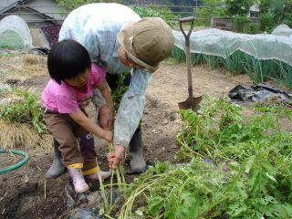 マコちゃん、じゃがいもを収穫!? 明日はお野菜販売の日!_e0166301_23135455.jpg