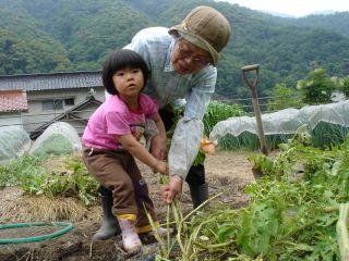 マコちゃん、じゃがいもを収穫!? 明日はお野菜販売の日!_e0166301_2315188.jpg