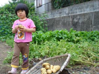 マコちゃん、じゃがいもを収穫!? 明日はお野菜販売の日!_e0166301_23163092.jpg