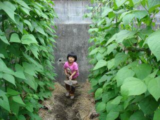 マコちゃん、じゃがいもを収穫!? 明日はお野菜販売の日!_e0166301_23194886.jpg