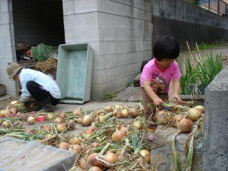 マコちゃん、じゃがいもを収穫!? 明日はお野菜販売の日!_e0166301_23231475.jpg