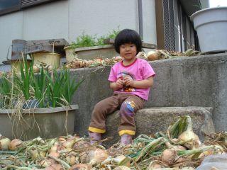 マコちゃん、じゃがいもを収穫!? 明日はお野菜販売の日!_e0166301_23261578.jpg