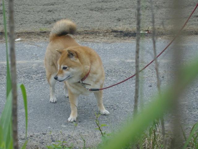 のんちゃん、お散歩中_d0139806_20575562.jpg