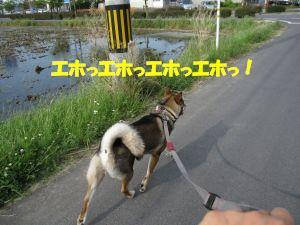 f0143123_20424512.jpg
