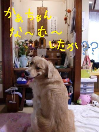 f0176830_20103831.jpg