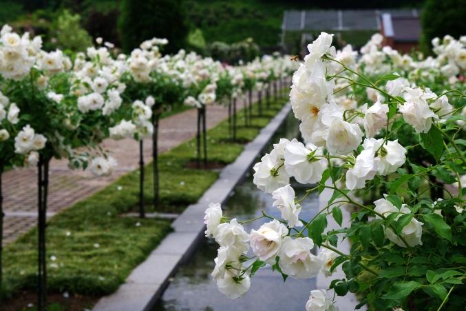 「ターシャの庭」にて ~花フェスタ記念公園~_d0145934_1112066.jpg