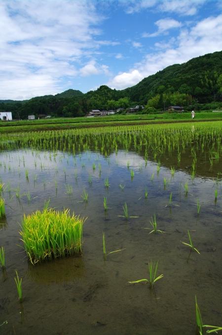 「ターシャの庭」にて ~花フェスタ記念公園~_d0145934_1115217.jpg