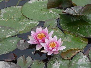 花と縄文めぐりウォーク下見_f0019247_10274460.jpg
