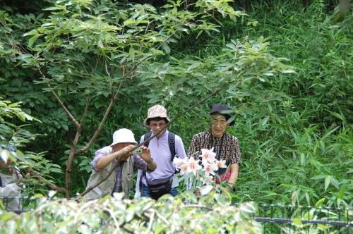 老人大学8期生:うみべの森のササユリと対面_c0108460_20555057.jpg