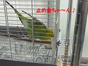 f0196665_0163695.jpg