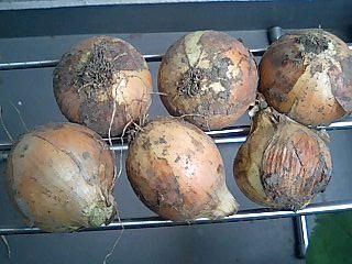 美味しいお野菜を使って_e0159969_184921100.jpg